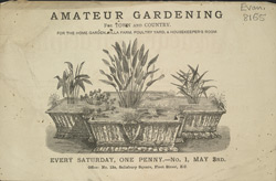 Advert for the Amateur Gardening Periodical